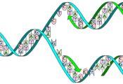 Genetica, Nederlands, literatuur, taal